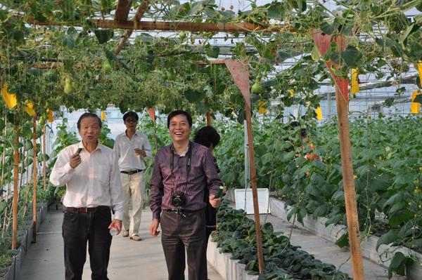 最新屋顶菜园效果图_屋顶菜园效果图_阳台菜园装修效果图; 世界屋顶