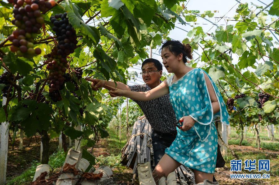丝足控_浙江长兴控产提质提升葡萄果农收入