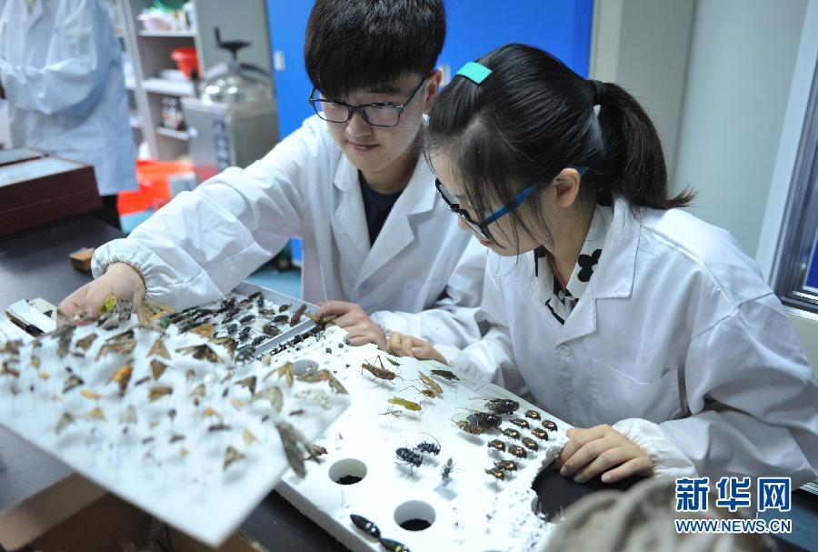 浙江大学生暑期制作昆虫标本
