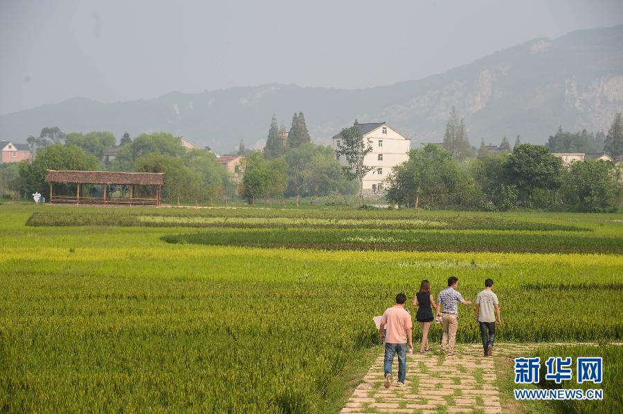 """浙江长兴""""太湖图影生态湿地文化园""""即将开门迎客"""