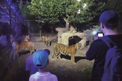 """走进""""动物园奇妙夜"""""""