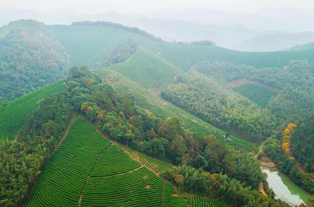 新型农业产业模式助力乡村振兴