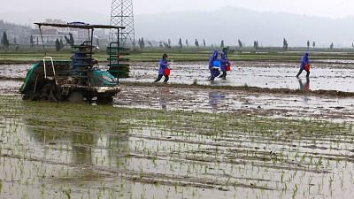 农业农村部:落实政策 确保早稻面积恢复增加