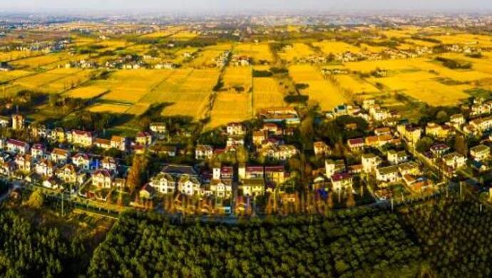 安徽省水稻完全成本保险强农惠农