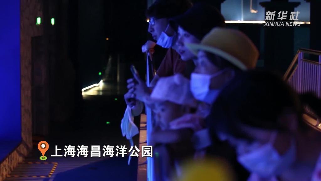 """上海:海洋動物吃""""月餅"""" """"海天鯨艷""""慶團圓"""