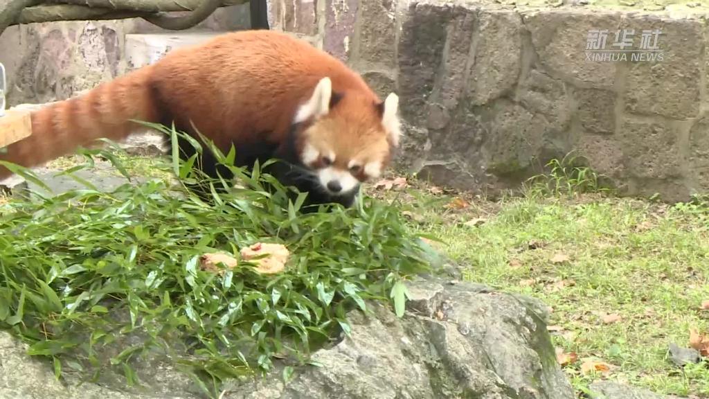 """上海動物園:小動物吃""""月餅""""過中秋"""