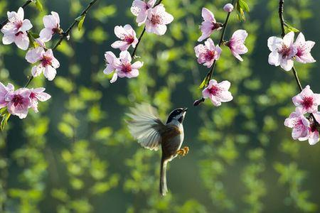 今日春分|燕飛猶個個,花落已紛紛