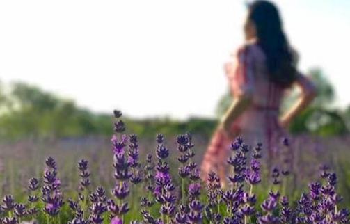 营造都市野趣 申城公园紫色花海进入最佳赏花期