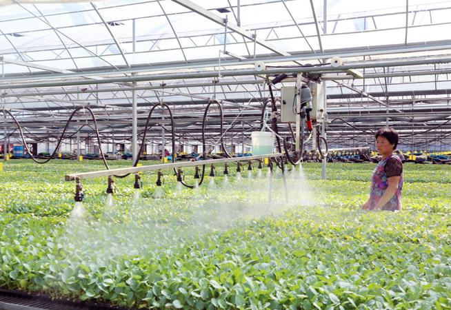 江苏东台:生态种植助力农民增收