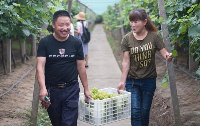 浙江上虞:四季水果种植拉动农业供给侧改革