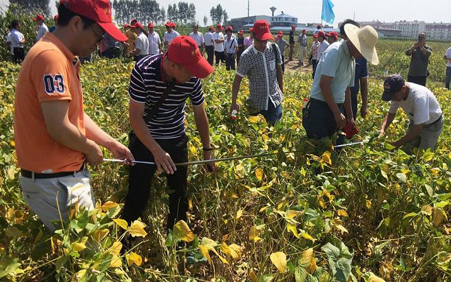 优质大豆获高产 示范种植开现场
