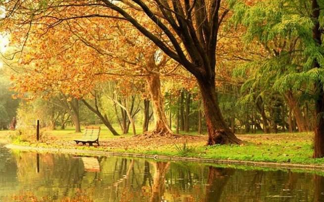 上海共青森林公园长假8天吸引10万游客