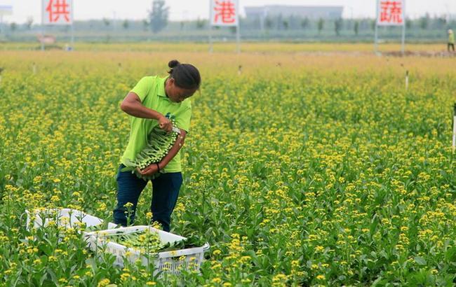 """江苏泗洪:发展生态农业 助力""""精准扶贫"""""""