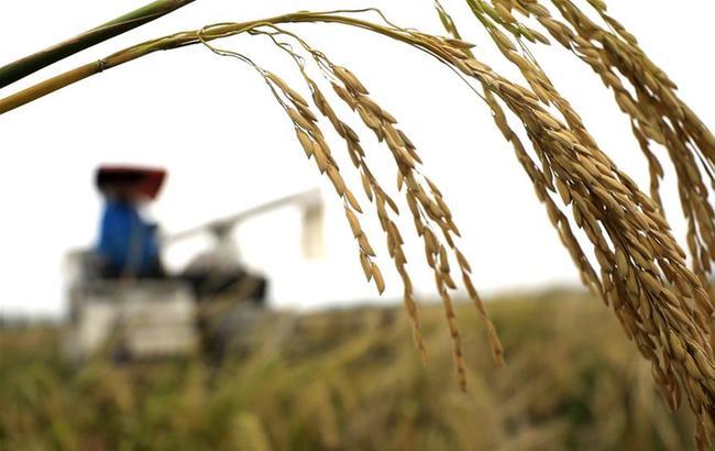 今年我国粮食有望再获丰收