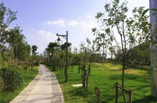 嘉闵高架(南翔段)生态景观廊道绿植完工 年底开放
