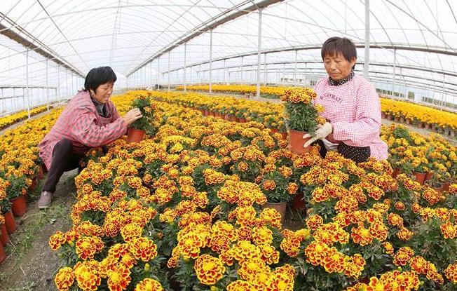 现代农业助民增收