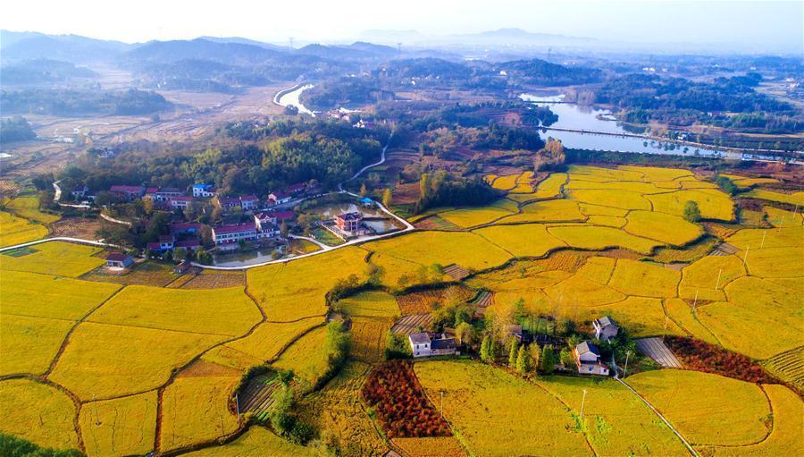 安徽舒城:美丽乡村入画来