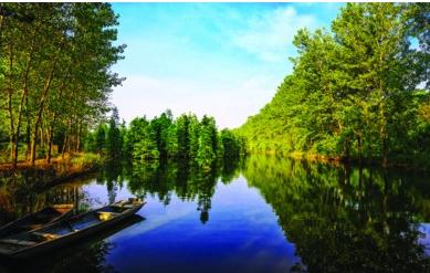 保护修复湿地 守护美好安徽生态健康