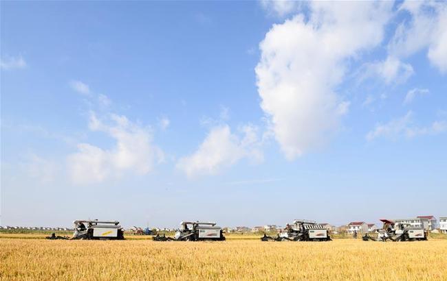 江苏启东:土地流转为现代农业注入新活力