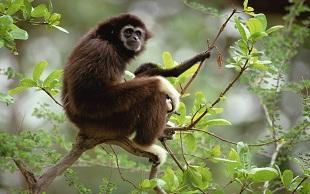 """全球不到300只的""""黄颊猴哥""""被卖到苏州当宠物"""
