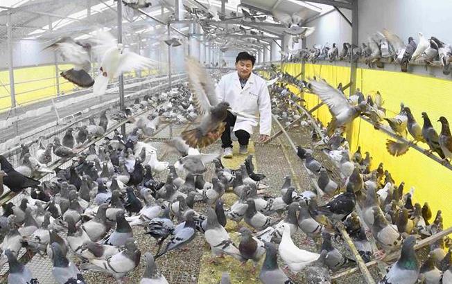 安徽利辛:绿色养殖助力脱贫