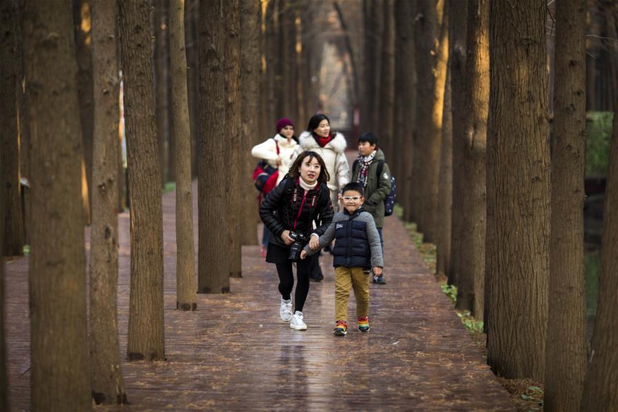 江蘇興化:水上森林冬景美