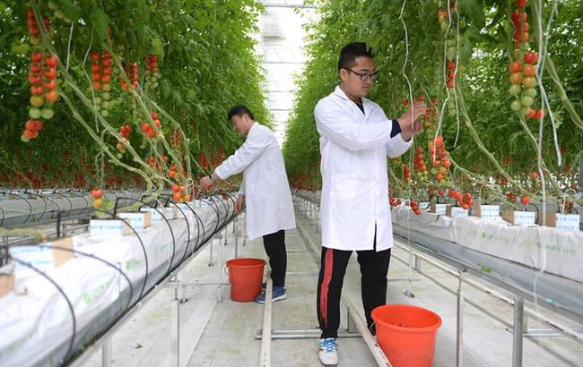 江苏海安:科技创新领跑现代农业