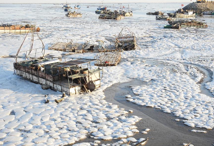 连云港沿海出现大面积海冰