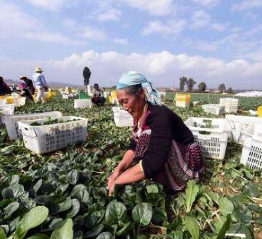 安徽到户产业扶贫覆盖率超9成 167万户受益