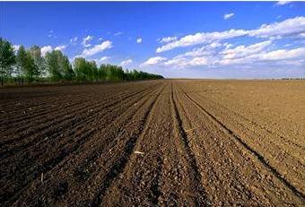 安徽农村承包耕地流转率达45.5%