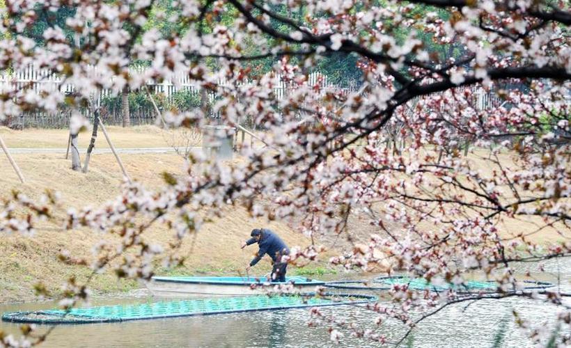 江苏扬州:绿化河道忙