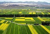坚持质量兴农绿色发展之路 推动安徽省现代农业做大做强