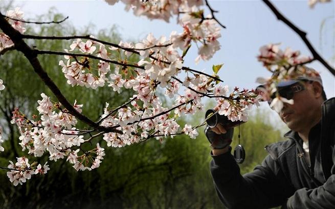 上海:赏春花 沐春风