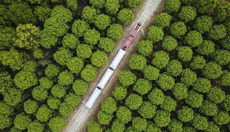 新华社评论员:厚植生态文明 耕耘美丽中国