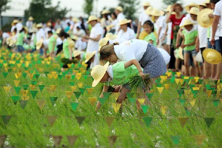 江蘇常州:走下秧田 體驗農耕