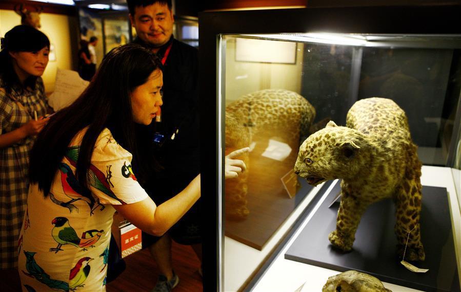 三馆联袂 上海博物溯源特展开幕