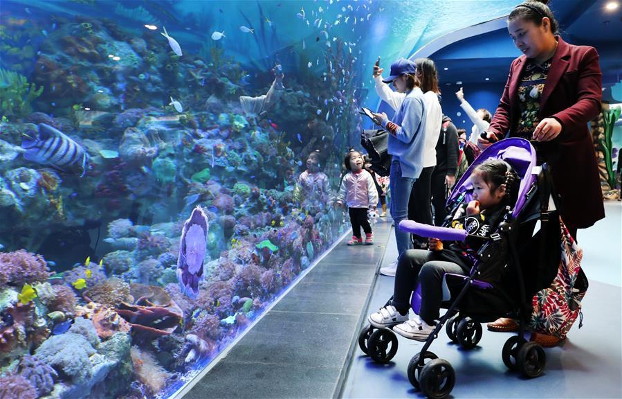 上海海昌海洋公园开门迎客