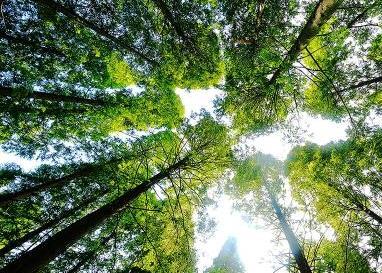安徽新增1處國家森林公園 總數達到35處