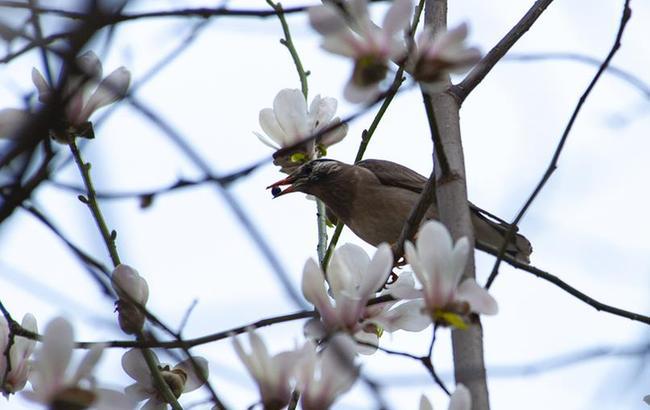 上海:鸟语花香