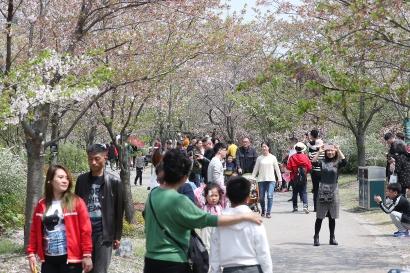 春光明媚,沪各大公园迎客流高峰