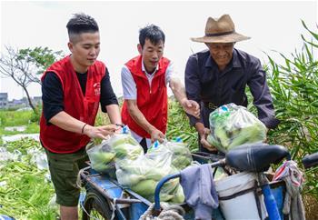 浙江慈溪:党员志愿者收卖玉米帮扶乡村低保户