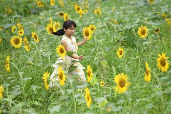 安徽明光:美丽乡村引游人