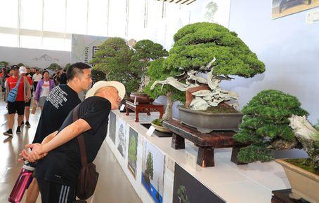 安徽:盆景斬獲世園會26個獎項