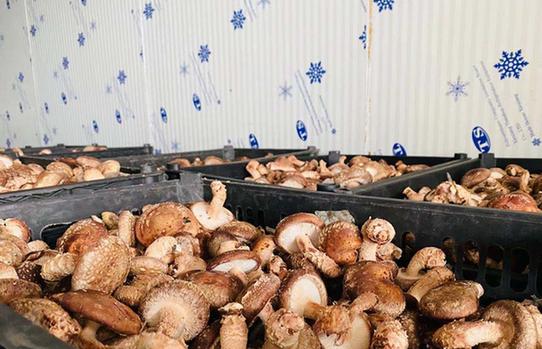 安徽利辛:现代农业产业 助力脱贫攻坚