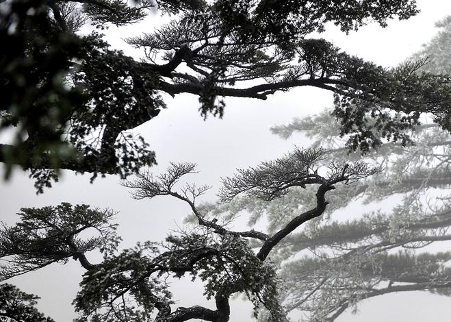 晶莹剔透、美轮美奂 黄山迎来今冬首场雾凇